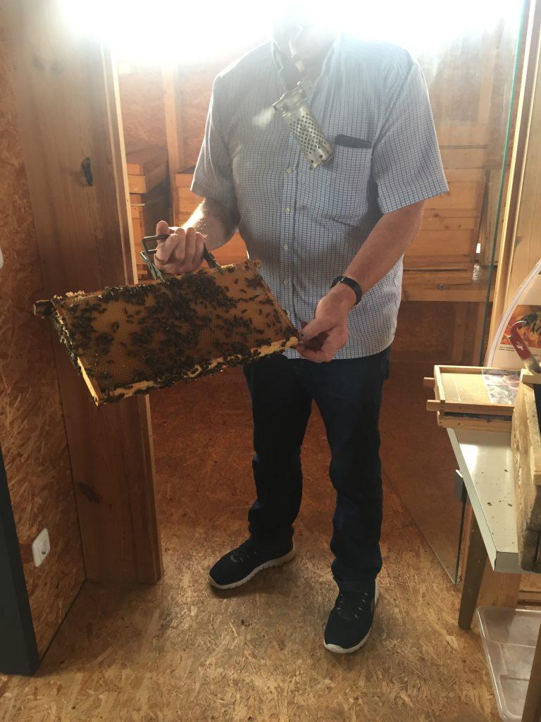 Wandertag der 6. Klassen: Besuch des Bienenhauses in Mainburg